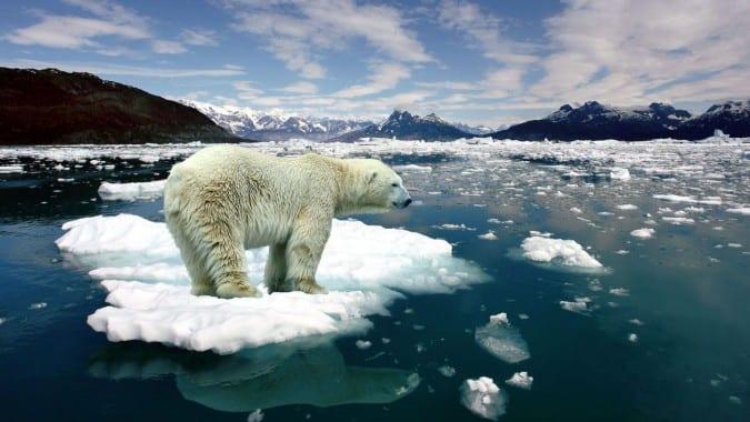 ice-melting-Bear-VD