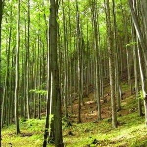 Lesy ČR chtějí do vodní infrastruktury investovat až 300 milionů