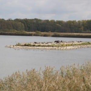 Podzimní půvab Bohdanečských rybníků
