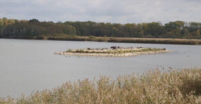Bohdanečský-rybník-4a-805x350