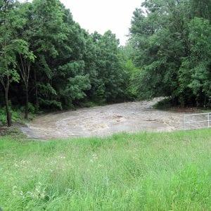 Vodohospodáři pomáhají lužním lesům, využívají povodně