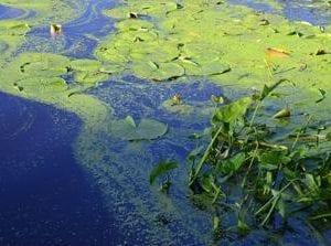 Fosfor z čistíren a rybníků se musíme naučit využívat, jeho zásoby docházejí