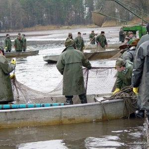 Rybářství Třeboň: V rybnících letos chybělo třicet procent vody