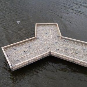 Rybák obecný má v přírodní rezervaci unikátní umělý plovoucí ostrov pro hnízdění