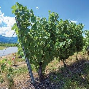 Vinaři uleví životnímu prostředí