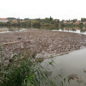 Množství spláví odklizeného z VD Brno dělá letos 500 tun